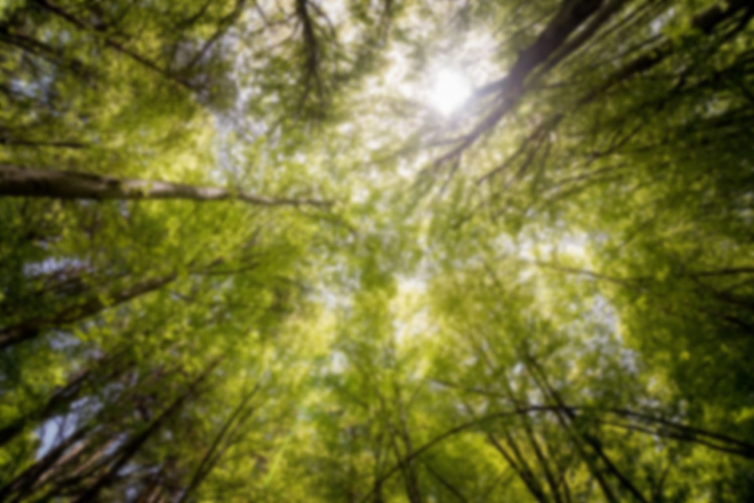 branches-daylight-environment-566496-1